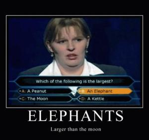 Elephants: Larger Than The Moon